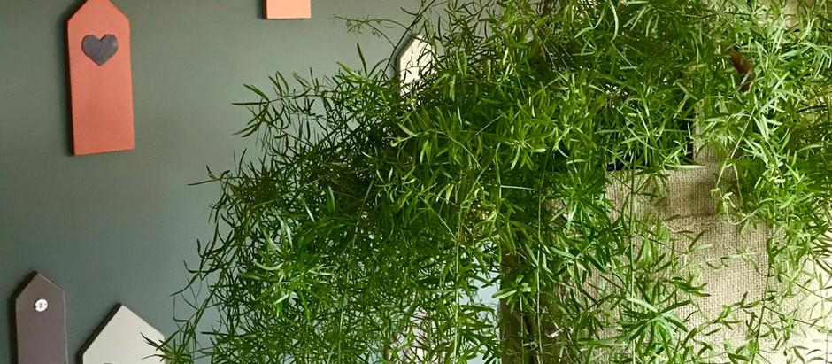 PLANT AAN PLAFOND