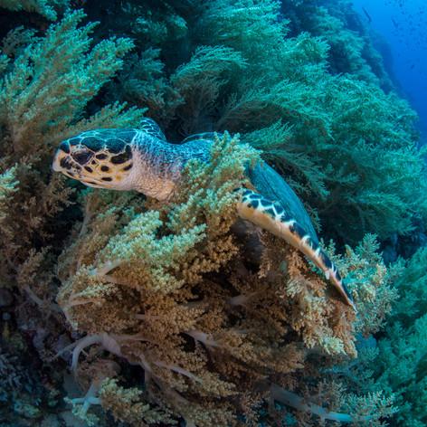 Turtle, Egypt