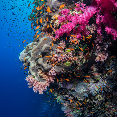 Egyptian reefscape