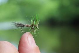 nice fly