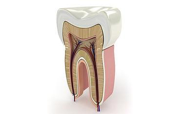 Endodontia Taubaté, endodontia tremembé, endodontia sjc, endodontia vale do paraíba, endodontia são josé dos campos, Dentistas Taubaté, Dentistas sjc, Dentistas tremembé, Dentistas vale do paraíba, dentistas são josé dos campos, reali reablitação oral