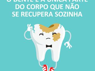 O dente é única parte...