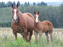annie and foal.JPG