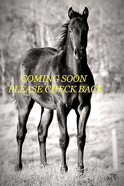 sale-horses.jpg