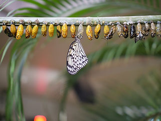 butterfly-life-cycle-3264176_1280.jpg