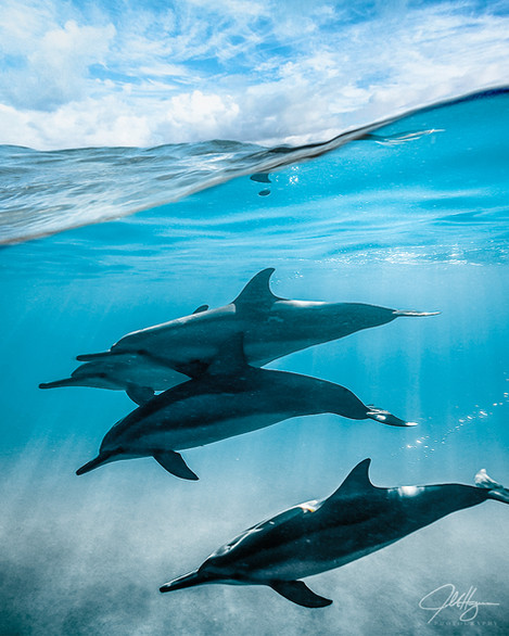 Dolphin Photoshop.jpg