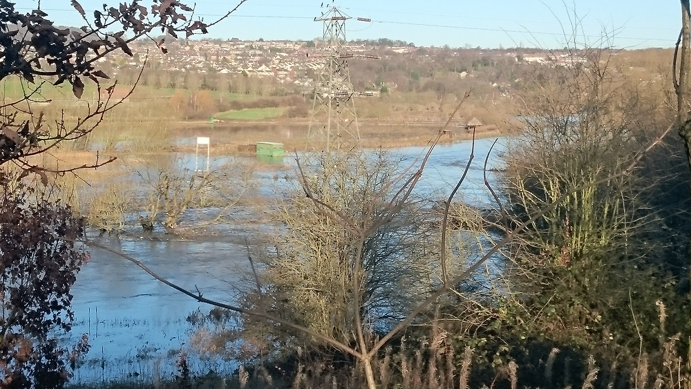 The inhabitants of Rodley wildlife reserve experiencing life in a floodplain