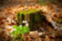 forest-1698314_1920.jpg