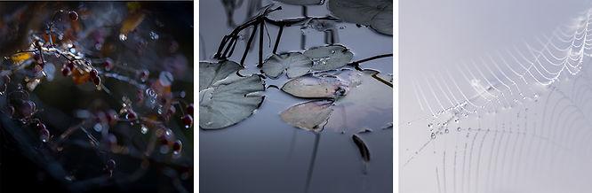 photographie, échantillons de nature, Martine Meyer