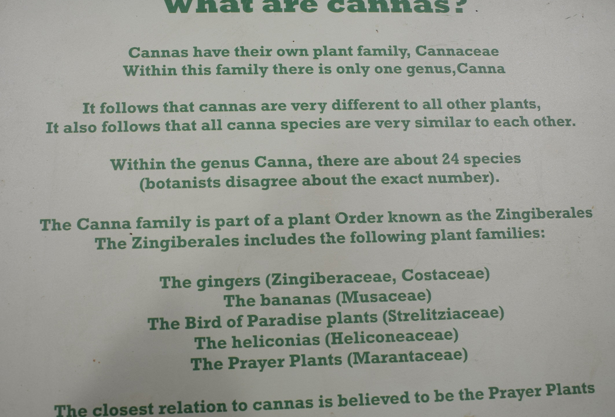 What are Cannas