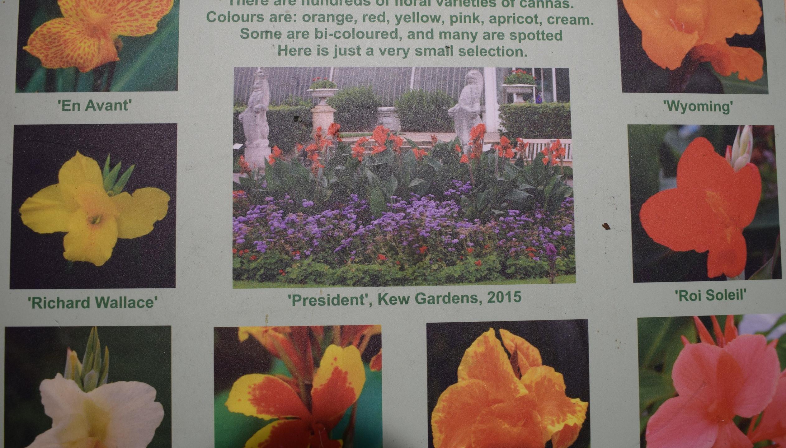 Floral Varieties