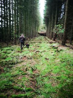 Chasse au bois en Ecosse