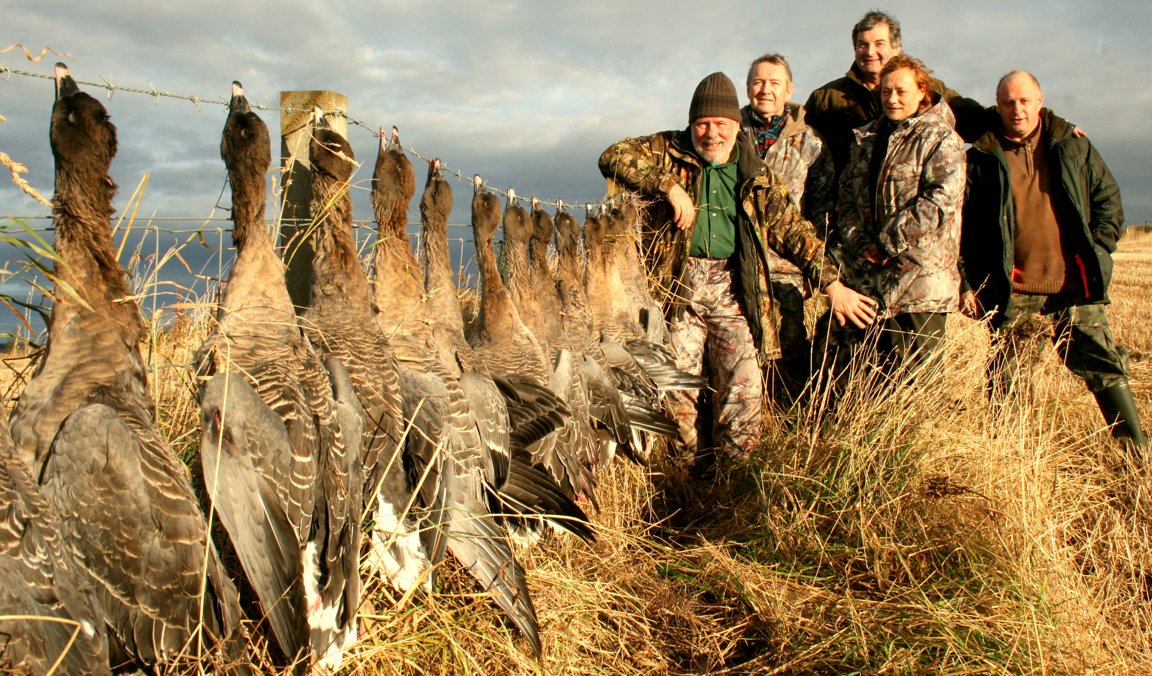 chasse oies Ecosse