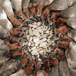 Chasse aux canards en Ecosse