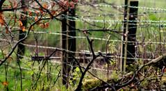 Chasse printemps en Ecosse