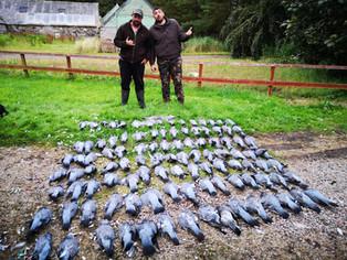 Bonne journéee de chasse aux paloimbes