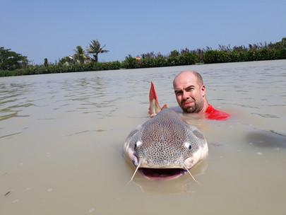 red tail predator catfish