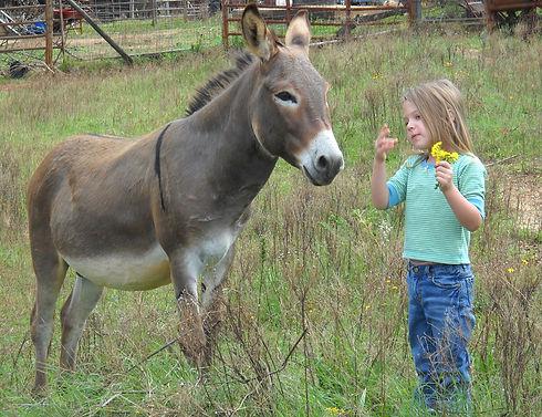 donkey-1621091_1920.jpg