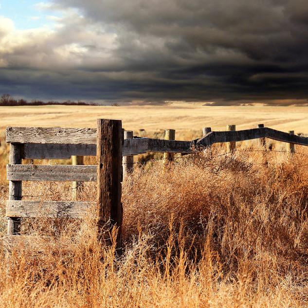 Harvest Fence