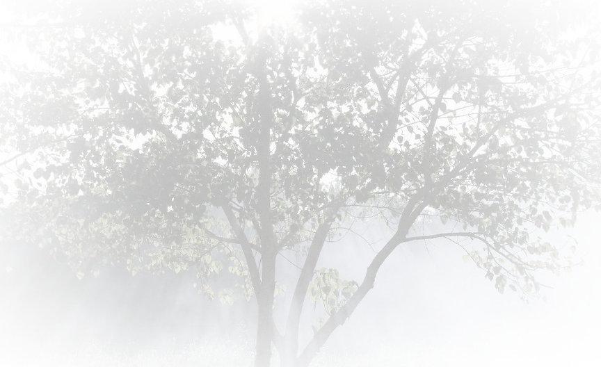 Misty%252520Sunbeams%252520_edited_edite