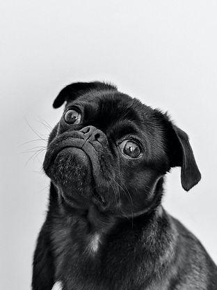 Little Dog Ears.jpg