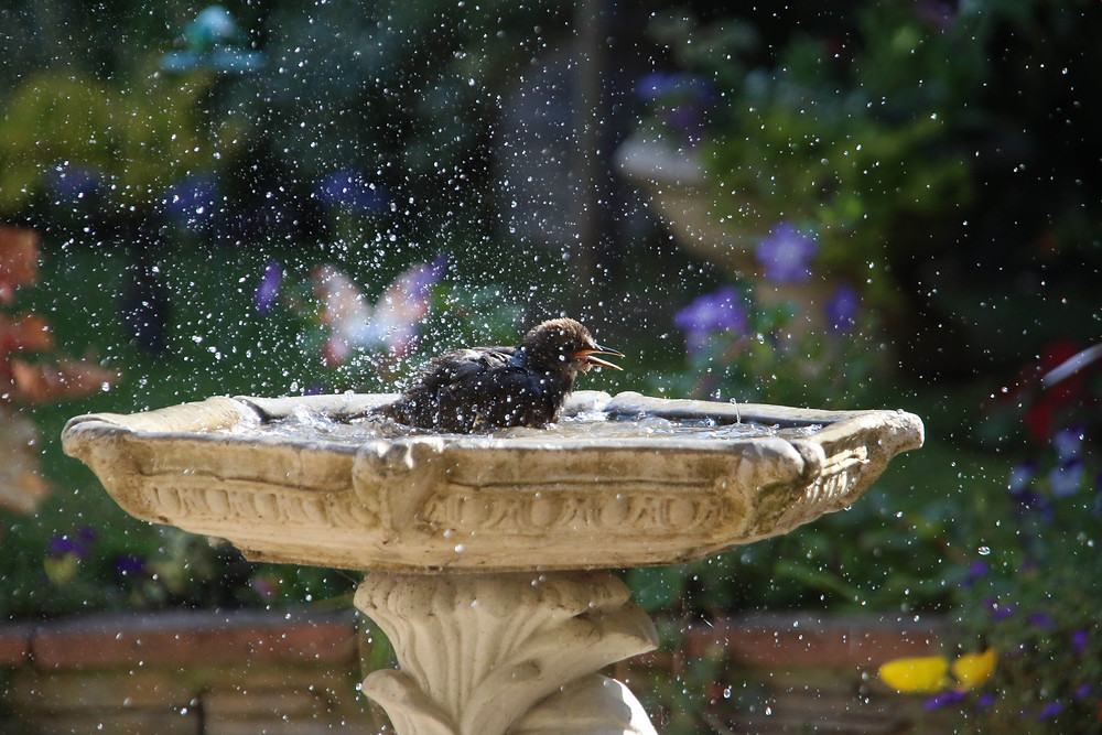 Wildlife Photography by Suki Foster