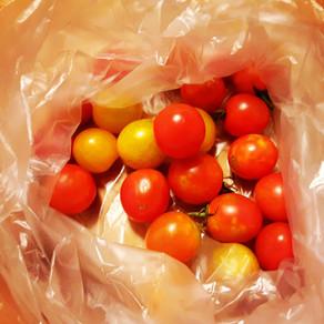 방울토마토 プチトマト