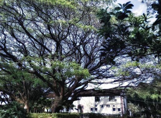Be like a tree, forever evolving.