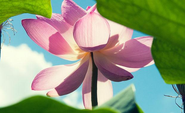 Meditation_Healing Hideaway by BIndiya M