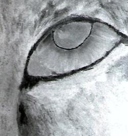 Silver Tiger (2)