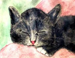 Kitty Nap (2)