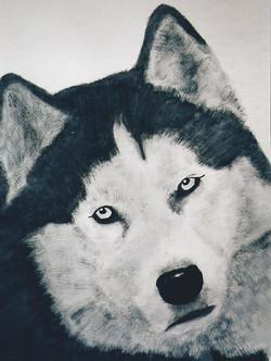 Best+Husky