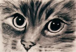 'Feline Profile'