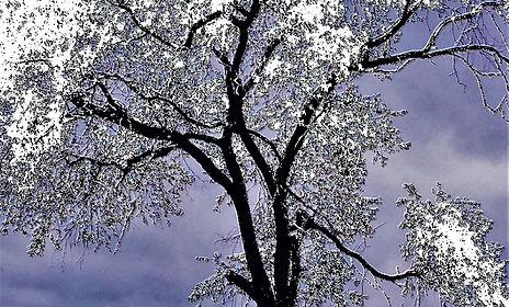 digital tree winter.jpg