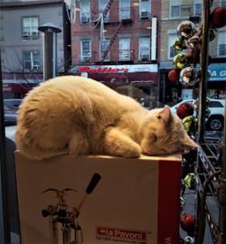 x-mas cat on box (2)