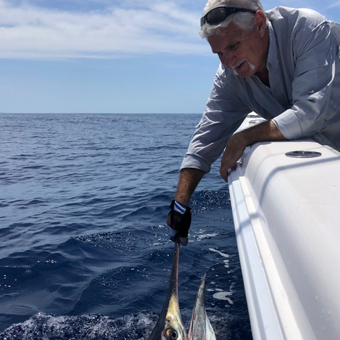Another Black Marlin for Unleashed Sportfishing!