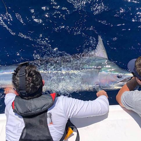 Gold Coast Black Marlin Charters
