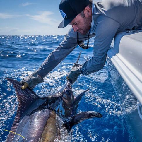 Gold Coast Blue Marlin