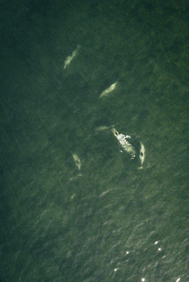 Delfines en la bahía
