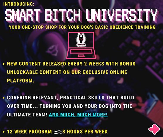 Smart Bitch University Page 2 Basic Bitch 12 Week Program Promo.png