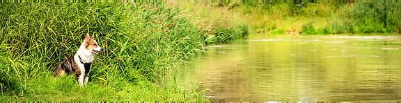 Swamp Dog .png