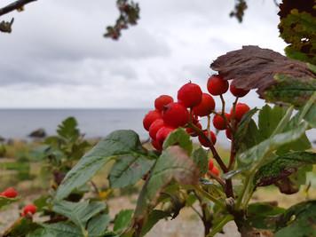 Höstens bästa (och gratis) hälsotips!