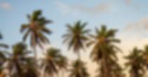 Palm%20Trees_edited_edited.jpg