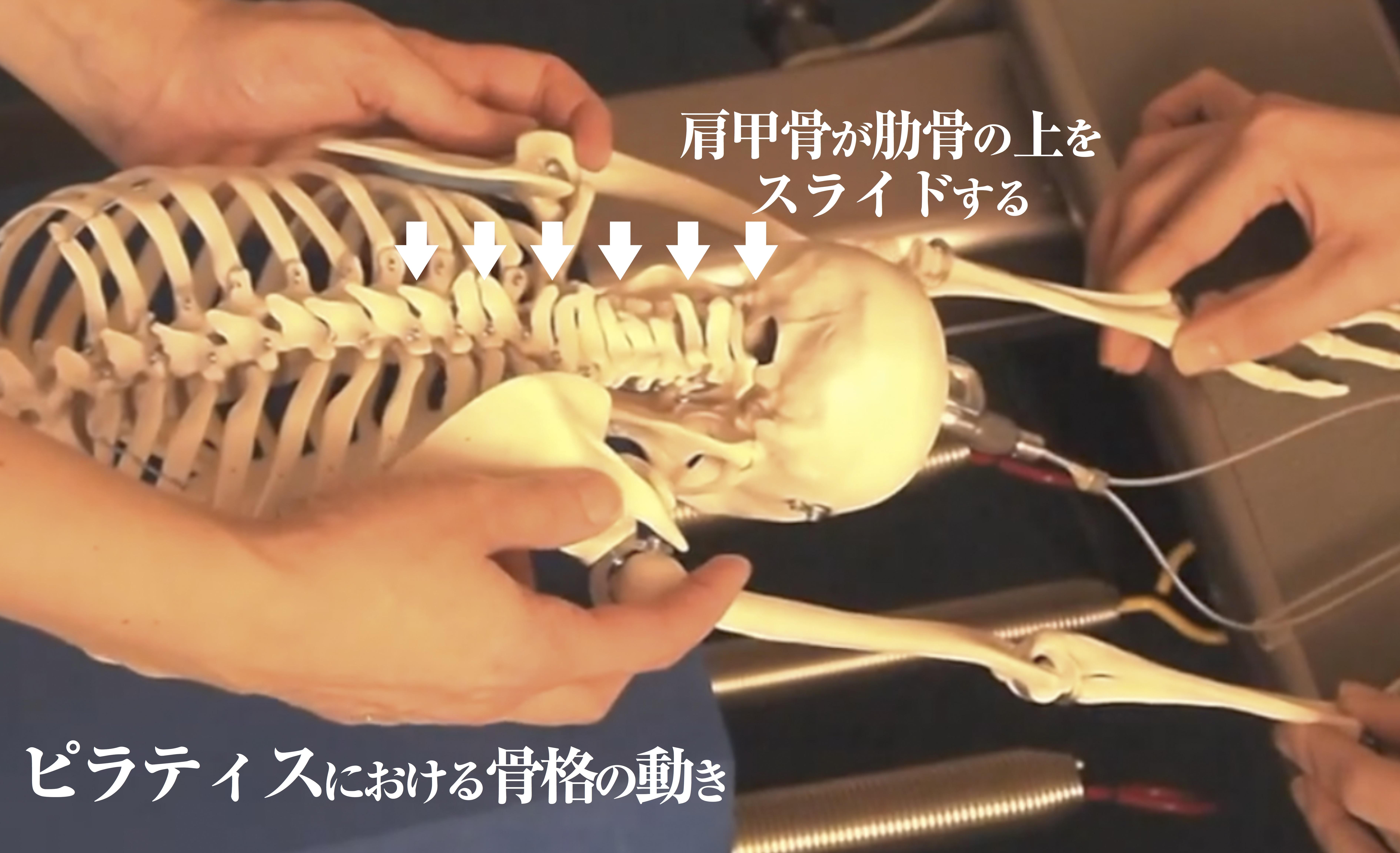 ピラティスにおける骨格の動き