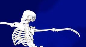 関節可動式の骨格模型 | Ninja Anatomy -忍者アナトミー