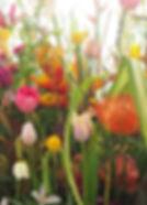 Blühende Inszenierung | Blumenhaus am Hofgarten | Düsseldorf