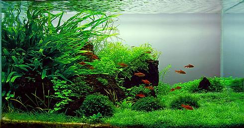 freshwateraquarium.png