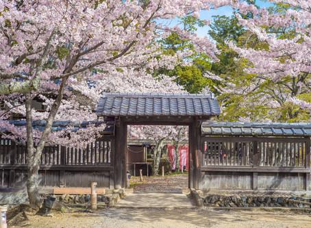 One Reason to Visit Japan Again: Sakura Season