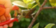 ornamentalpruningimage.jpg