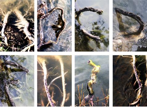 Nature made Alphabet